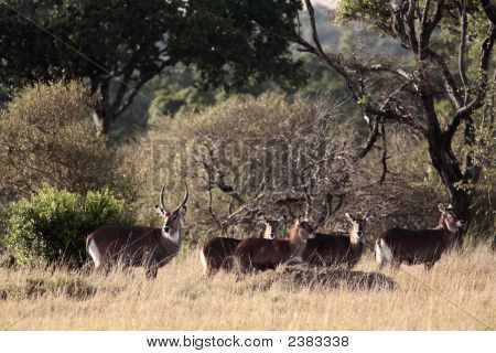 Waterbuck Family_0254
