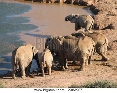 Elefantes no poço