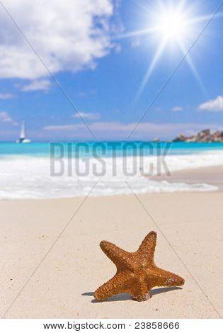 Shell on a Shore Beach Detail