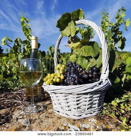 White Wine Square