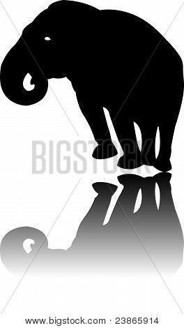 Silhouette der schwarze Elefant Vektor