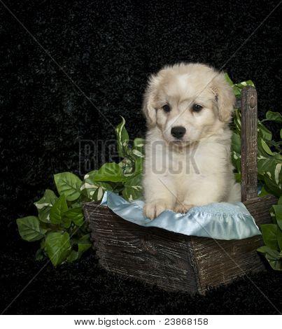 Little Buff Puppy