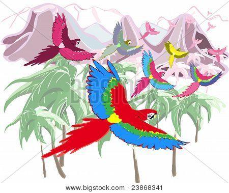 Macaws in jungles