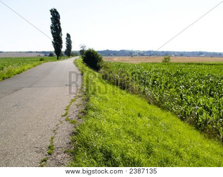Corn Field And Rural Route