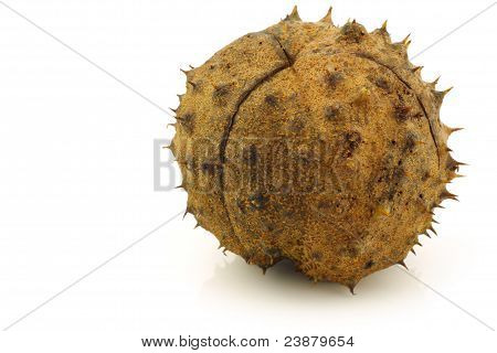freshly fallen chestnut(Aesculus hippocastanum) in the shell