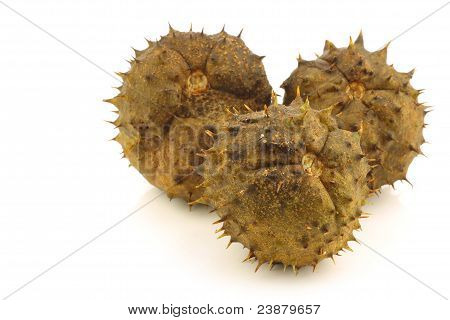 freshly fallen chestnut(Aesculus hippocastanum) in the shell