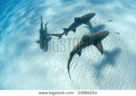 Shark Shadow