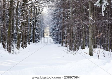 An image of a nice winter scenery in the black forest area