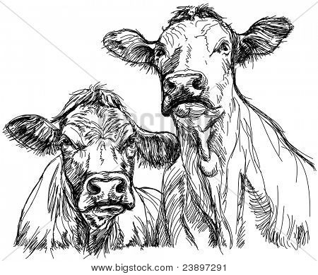 Two cows - black and white sketch.  Bitmap copy my vector ID 69101680