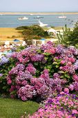 pic of cape-cod  - View of the ocean in Chatham on Cape Cod with hydrangea in ghe foreground - JPG