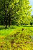 Spring Landscape. Park Spring Trees And Flooded Spring Lawn In The Park In Sunny Weather. Colorful S poster