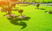 Sunlight Shines On The Green Lawn In The Quiet Garden., Landscaped Formal Garden, Front Yard With Ga poster