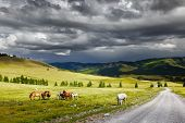 stock photo of bronco  - Mountain landscape with grazing horses and storm clouds - JPG