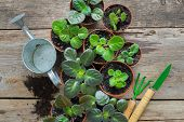 Several Flowerpot Of Home Plants. Planting Potted Flowers, Watering Can And Garden Tools. poster