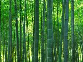 stock photo of bamboo forest  - beautiful asian green bamboo forest scenic background - JPG