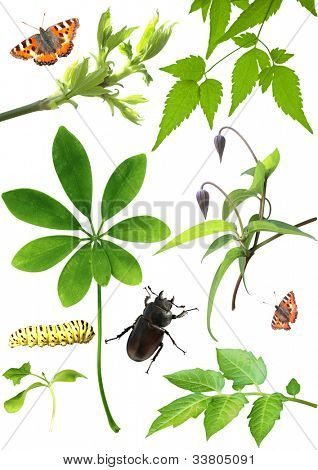 Set of green leaves, flowers and insects. Isolated over white