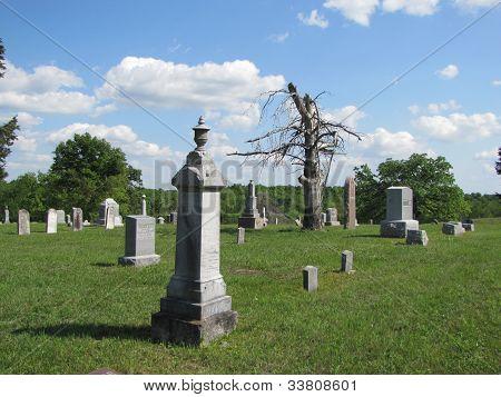 Dead treen among gravestones