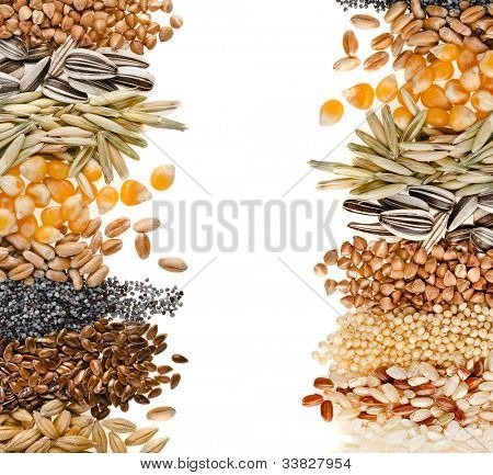 Border frame of Cereal Grains and Seeds : Rye, Wheat, Barley, Oat, Sunflower, Corn, Flax, Poppy, Millet on white