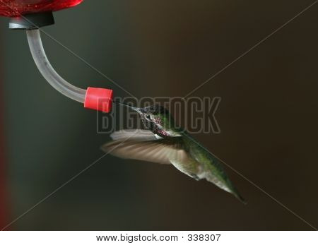 Bchumming Bird Wings Forward