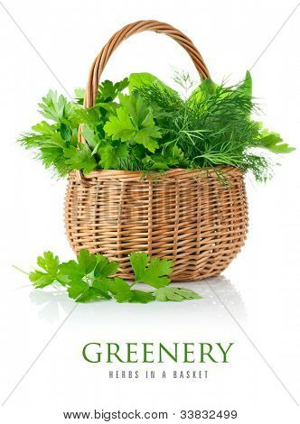 fresh spicy herb in basket isolated on white background