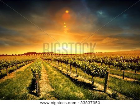 Beautiful Sunset over a Barossa Vineyard