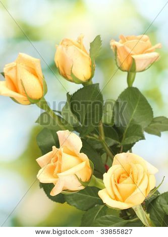 beautiful bouquet of roses on green background