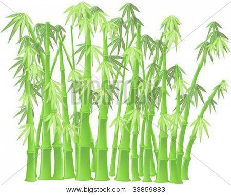 Bambus ergibt sich auf weißem Hintergrund