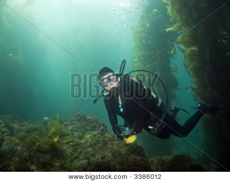 Diver Looking Into The Camera In Catalina