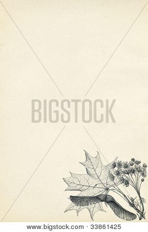 Botanische Gravur auf Vintage Paper-Hintergrund