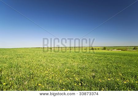 Field Of Grass