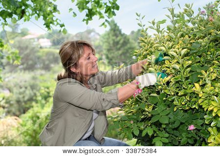 Senior woman taking care of flowers in garden