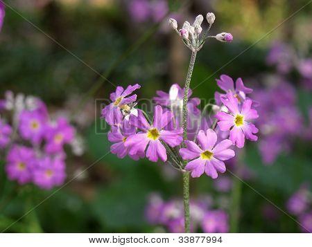 Violet Flower On Field