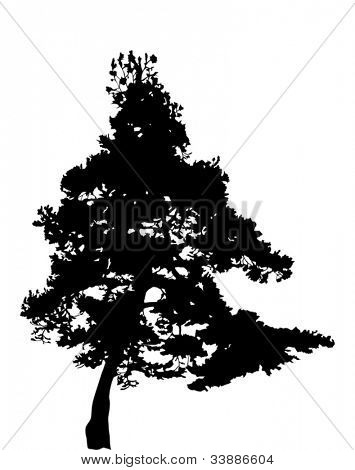 Abbildung mit Pine Tree Silhouette isolated on white background