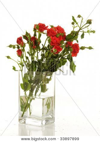 a bunch of red roses in the transparent vase on the white background