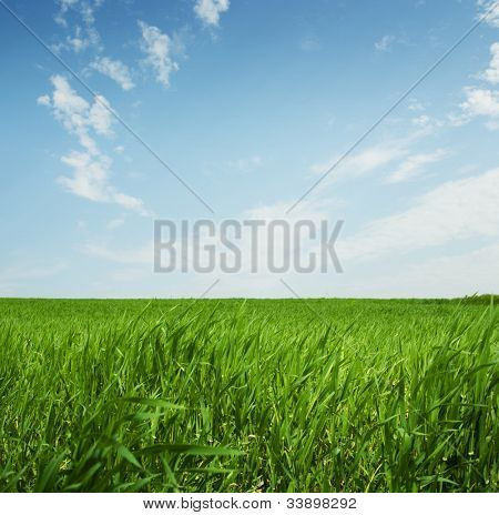 Green lawn and sky blue with white cloud