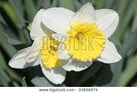 flower made of white beauty