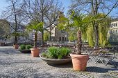 Large Palm Trees Plants In Large Wooden Pots In A Street Cafe In A European City poster