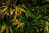 Asian Leaves In The Rainforest Background Asian Leaves In The Rainforest Background Beautiful, Beaut poster