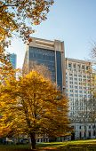 Highrise Buildings In Philadelphia, Pennsylvania, Downtown. Skyscrapers On Blue Sky With Fall Trees  poster