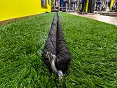 Black And Long Gym Rope In A Modern And Well Equipped Gym, Laying On The Ground Ready To Be Used For poster