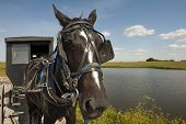 image of mennonite  - An Amish horse and buggy traveling a gravel road pass by a pond and open field on a sunny day - JPG