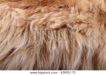Fluffy Animal Fur Texture