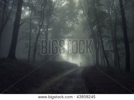 Man i a dark forest with fog in summer