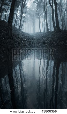 Lake in a dark spooky forest with fog