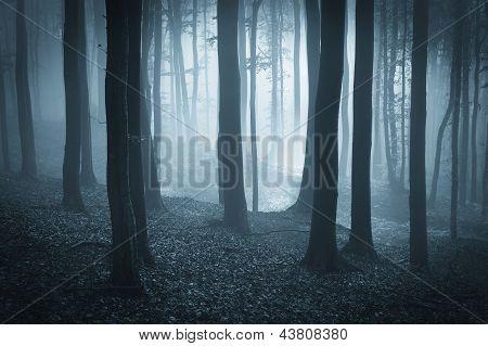 Bosque oscuro con niebla y luz