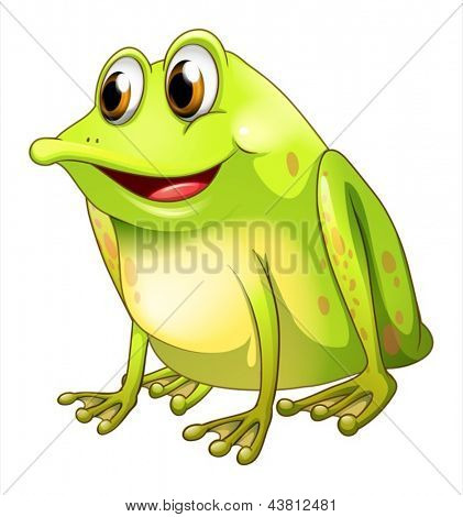 Illustration of a green bullfrog on a white background