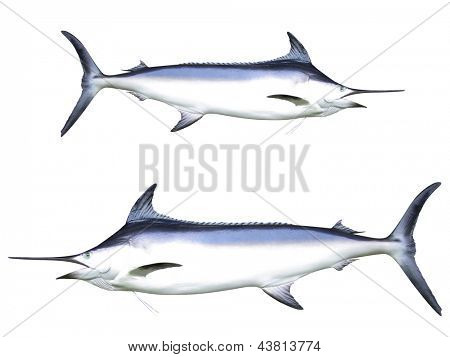 Photo of Swordfish