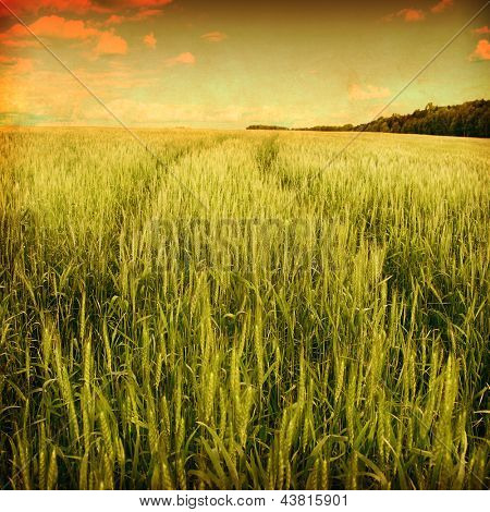 Wheat field with road in grunge and retro style.
