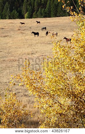 Nicola Valley Horses Grazing, British Columbia