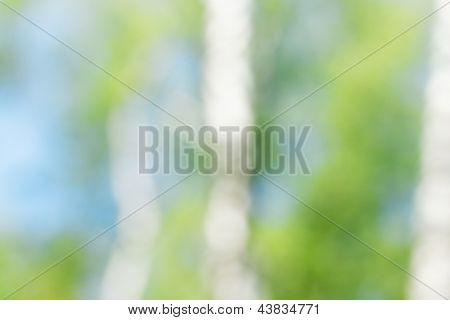 Vidoeiro na temporada de Primavera. Tiro de bokeh, pode usar como plano de fundo.